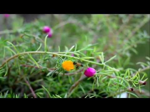 سروشتی کوردستان