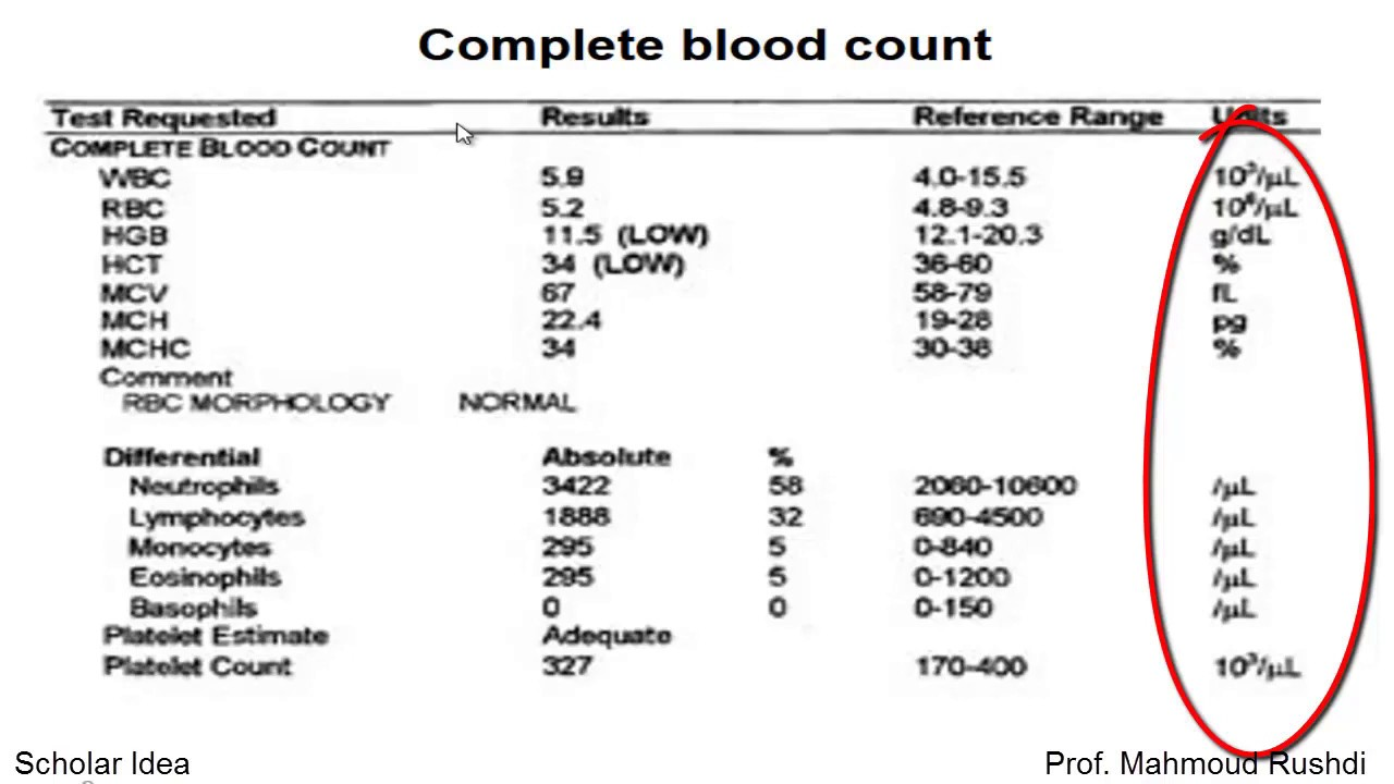 Complete Blood Count Cbc مايجب أن تعرفه Youtube