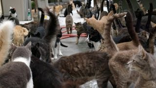 Happy Cat Sanctuary Welcomes Seven More Residents
