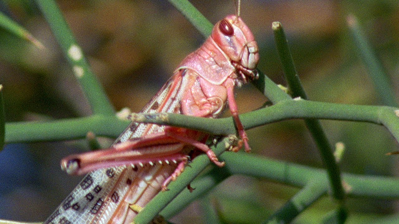 How to Prepare for a Swarm of Cicadasand Why You Should ...