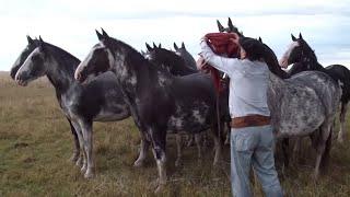 VENDIDA -Tropilla de 10 caballos en total, todos mansos $15000. WWW.LOSEQUINOS.COM