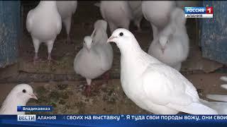 Житель Владикавказа Георгий Амбалов с детства разводит редкие породы голубей