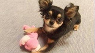 森田誠の愛犬と豊かに暮らすためのしつけ法はこちらから リンク先の動画...