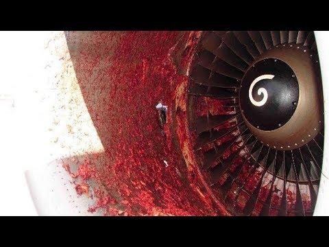 Das passiert, wenn ein Vogel in eine Flugzeugturbine fliegt!