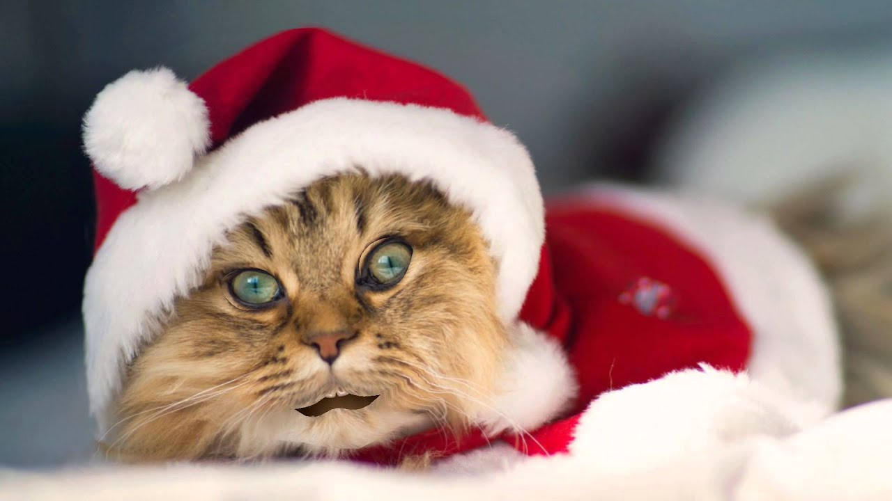 santa cat merry christmas and happy new year youtube - Merry Christmas Cat