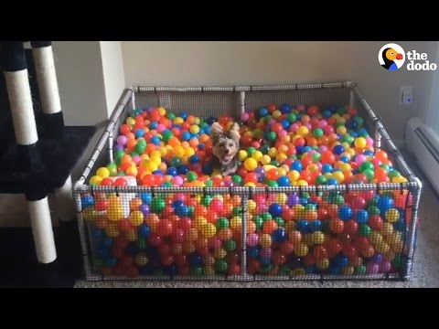 This Dog Really Loves Balls