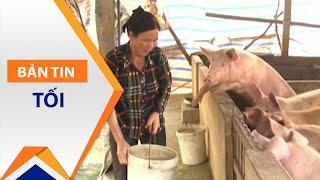 Hà Nam: 60% dân Ngọc Lũ 'khốn' vì nuôi lợn | VTC1