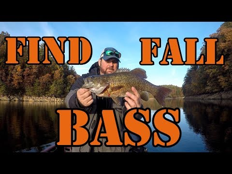 How To Find Fish In The Fall