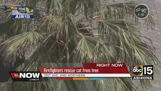 Firefighters rescue cat from tree