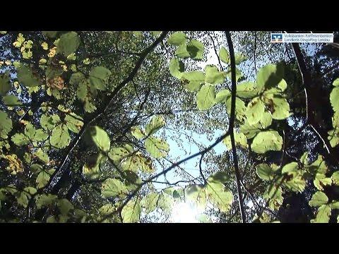 Waldnaturschutzpreis 2015 Dingolfing-Landau