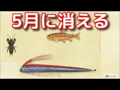 あつまれどうぶつの森 5月の魚