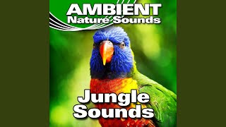 Whistling and Chattering Jungle Background with Insects