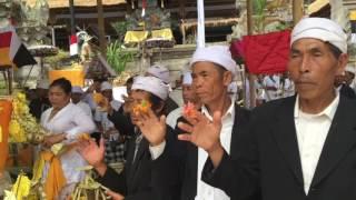 Upacara Bali Sumpah, Mendem Pedagingan & Melaspas Meru di Pura Hulundanu Batur, Desa Pekraman Songan