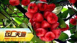 《农广天地》 20190610 爆红莲雾温泉鹅| CCTV农业