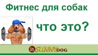 Фитес длясобаки Что это  Фитнес для спортивных собак и выставочных   в чем разница