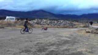 Txusta Sigue Con Sus Entrenamientos De Bikejoring