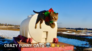 Ron Ferris (CFC66),Justice for Cats, Crazy Funny Cats . crazyfunnycats66