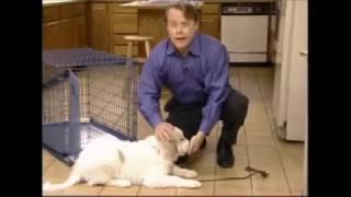 Обучающий фильм Midwest  - Как с помощью клетки справиться с поведенческими проблемами собак