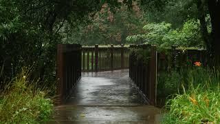 8 часов успокаивающего звука дождя для сна в зеленом лесопарке.