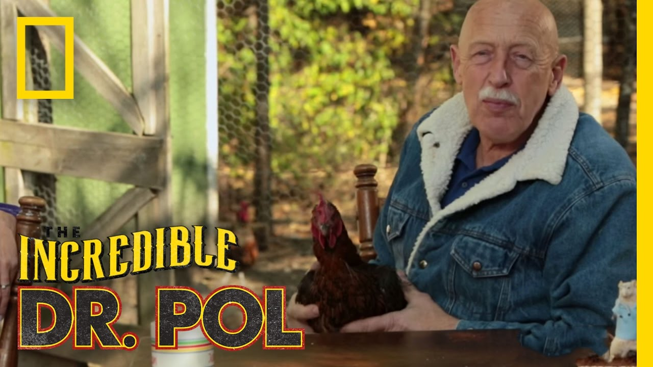 Racing Chickens - Episode 9 | Coffee Break With Dr  Pol