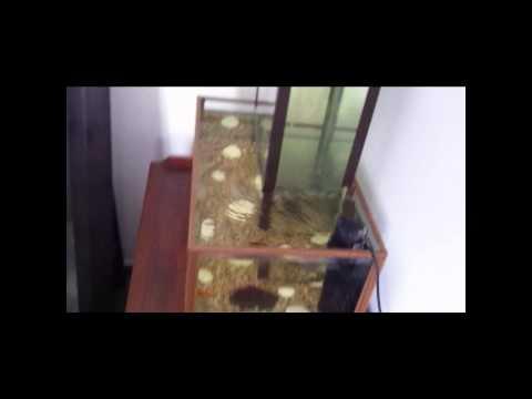 Acuario invertido con doovi for Do betta fish sleep on the bottom of the tank