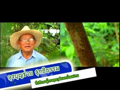 รอบรู้เรื่องสมุนไพรไทย อบเชย1