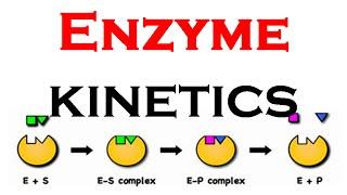 Enzyme kinetics animation