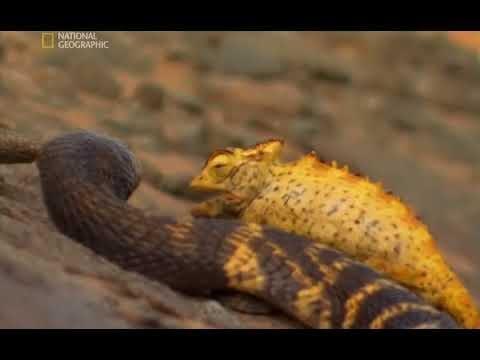 National Geographic -Най-опасните животни в света: От пустинята до саваната BG AUDIO