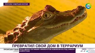 Опасные питомцы: как в сельском доме живут крокодил и двухметровый удав - МИР24