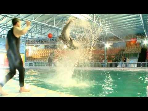The Dolphin Resort Bahrain