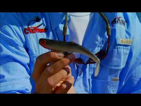 "Z-Man SwimmerZ 6/"" Smoky Shad 3 Pack Soft Plastic SWIM6-57 Bass Barramundi"
