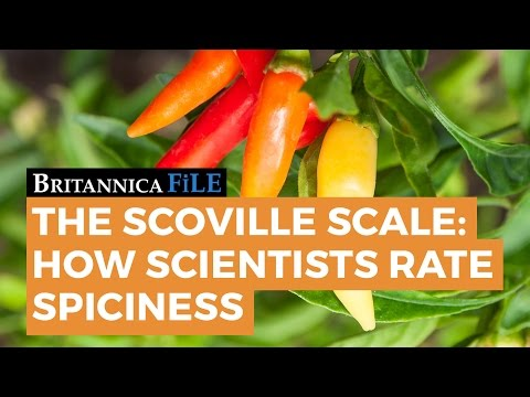 BRITANNICA FILE: The Scoville Scale—How Science Rates Spicy | Encyclopaedia Britannica