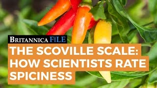 The Scoville Scale: How Scientists Rate Spiciness
