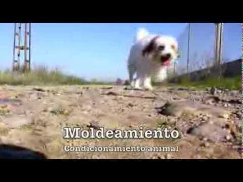 Manual de entrenamiento canino basico