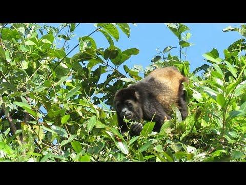 Cuero Y Salado Wildlife Refuge - Part. 1 - Honduras