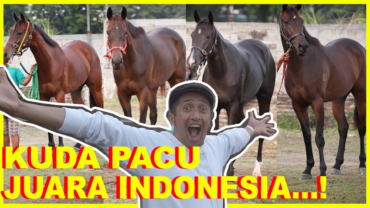 KUDA PACU JUARA INDONESIA DERBY...!!! - YouTube