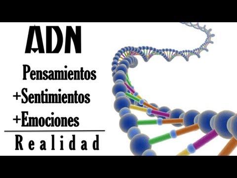 adn:-pensamientos+sentimientos+emociones
