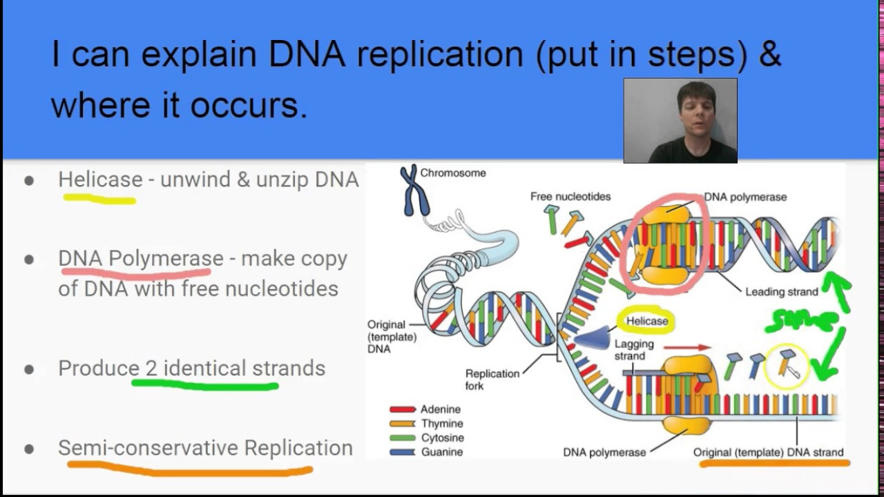 small resolution of dna base pairing rules in under 1 minute mr pauller