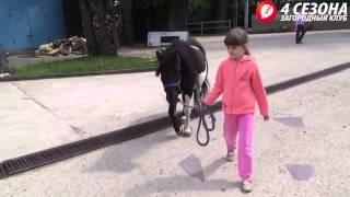 """Занятия конным спортом в клубе """"4 СЕЗОНА"""""""