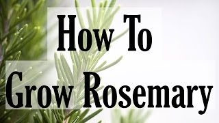How To Grow Rosemary - Gardening Know How's Two Minute Gardening Tidbit - Eps 3