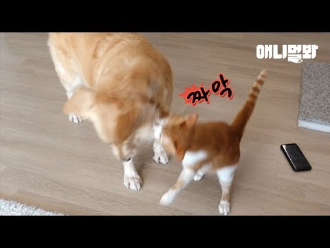 The Reason Why A Cat Slaps His Ol' Fwend Retriever On A Cheek Is