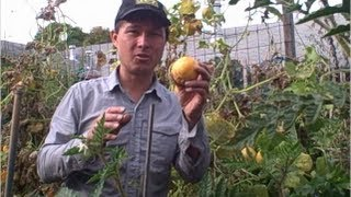 Harvesting Lemon Cucumbers at the Garden EOS in November