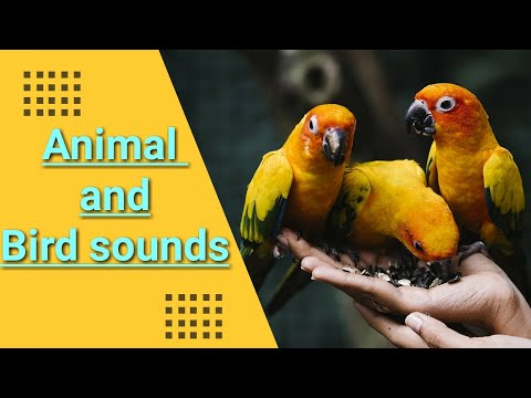 Sounds Of Animals And Birds || Spoken English || Very Important Video