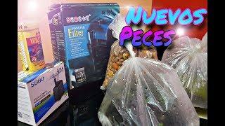 Comprando nuevos peces y plantas flotantes para el acuario de GUPPYS - Aldair Rodríguez