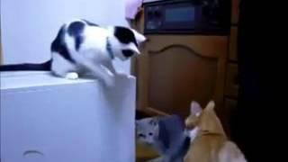 Самое ржачное видео в мире, короткие ролики  Прикольные и смешные видеоролики_3