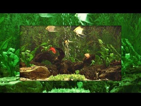 ♒ Virtual Aquarium with Bubbles