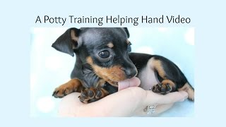 Potty Training Your Miniature Pinscher Puppy, Helping Hand To Housebreaking a Miniature Pinscher