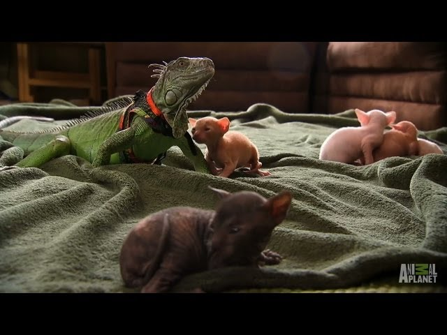 Party Time in the Animal House! | Too Cute!