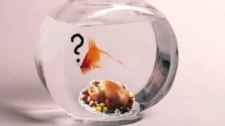 John Kongos   Confusions about a Goldfish
