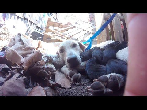 Perros recién nacidos rescatados en zona de desalojo, Cancún.